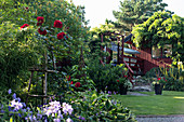 Red climbing rose in garden with wooden summerhouse in background