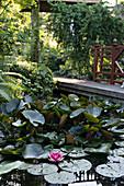 Gartenteich mit Seerose