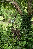Weidensäule am mit Efeu bewachsenem Baum