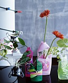 Old cleaning agent bottles used as vases