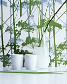 Carafe and white ceramic beakers in front of herb-patterned wallpaper