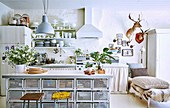 Vintage kitchen counter with storage baskets, fully loaded crockery shelf above sink in background