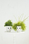 Foliage plants in white pots with painted faces