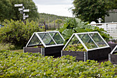 Raised beds with glass cloches in vegetable patch