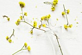 Tipped vase, spilled water and flowering twigs of cornelian cherry (Cornus mas)