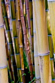 Various bamboo canes