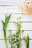 Frühlingsblumen auf weißen Brettern