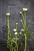White ranunculus and gypsophila on black wooden surface