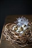 Quail eggs in nest against black background