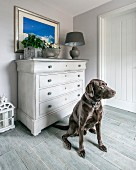Dog sitting on grey floor in front of chest of drawers