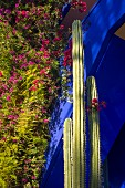 Cacti and flowering bougainvillea against ultramarine house façade