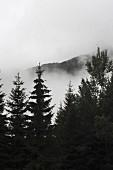 Nebelschwaden hinter Bäumen