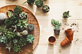 Cactus and succulents on wooden surface