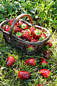 Artificial strawberries in and around basket on grass