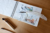 Quill pen on top of drawings of birds in sketch book
