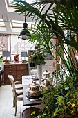 Antique armchair, potted palm tree and dining table in vintage interior