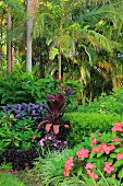 Tropical garden with palm trees and exotic plants