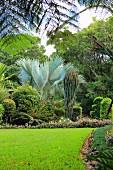 Rasen vor einem Beet mit tropischen Pflanzen