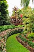 Gartenweg mit Rasen gesäumt von Hecken im tropischen Garten