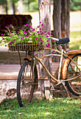 Pink petunias in basket of rusty bicycle leaning against veranda