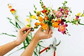 Arranging bunch of colourful freesias
