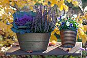Tin vessels with Calluna vulgaris (bud heather, broom heath)