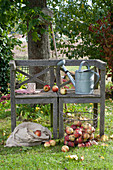 Wooden bench in the garden, basket and sack with freshly harvested malus