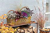 Salvia officinalis 'Tricolor' 'Purpurascens', Heuchera 'Galaxy'