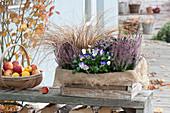 Calluna vulgaris Garden Girls 'Lisann'