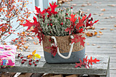 Basket bag with Calluna vulgaris Garden Girls 'Alicia'