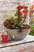 Autumn cup with Pyracantha (Fire-thorn), Gaultheria procumbens