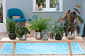 Wooden bench with houseplants as room divider