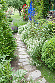 Path made of natural stone slabs on the flowerbed with Salvia nemorosa 'snow hill'