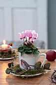 Cyclamen persicum (mini-cyclamen) in cup with bird motif