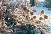 A bed of frozen shrubs, perennials and grasses