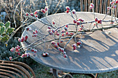 Frozen branch with rose (rosehip) on rusty table