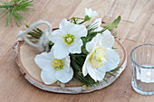 Small bouquet of Helleborus niger (Christmas rose), Pinus (pine)