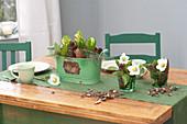 Green metal jardiniere with Hyacinthus orientalis 'White Pearl'