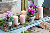 Advent decoration with cyclamen persicum, and 4 candles