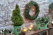 Picea glauca 'Conica' in metal bucket, wreath from Tsuga