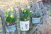 Tin plates with Narcissus 'Tete A Tete' (Narcissus), Muscari