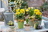 Primula elatior Crescendo 'Yellow', Narcissus 'Tete A Tete'