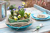 Spring bowl in felt coat, Viola cornuta, Hyacinthus