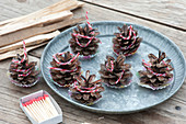 Homemade lighters for fireplace and grill from cones of Picea