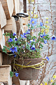 Pot with anemone blanda hanged on firewood pile
