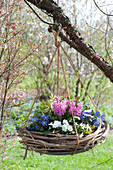 Hyacinthus 'Pink Pearl', Anemone blanda