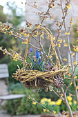 Hanging basket nest made from branches of Cornus stolonifera 'Flaviramea'