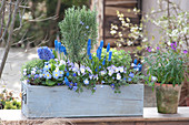 Rosemary stems, muscari, viola