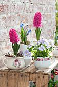 Hyacinthus 'Jan Bos' (hyacinth), Viola cornuta 'Lavender Blush'