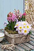 Primula acaulis (primrose), Hyacinthus 'Pink Pearl' (hyacinth)